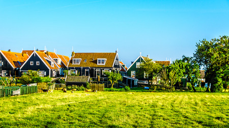 Goats in a meadow near traditional houses with green boarded wall and red tile roof in the small historic fishing village of Marken in the Netherlands
