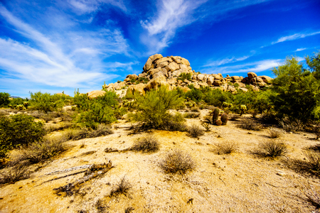 cholla: Desert Landscape with Cholla and Saguaro Cacti and Desert Shrubs at the Boulders in the Arizona desert near the town of Carefree in Arizona in the United States