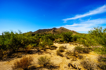 cholla: Desert Landscape with Cholla and Saguaro Cacti and Desert Shrubs at the Boulders in the Arizona desert near the town of Carefree in Arizona in the United States with Black Mountain in the Background