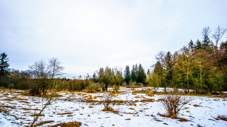 covered fields: Winter landscape with snow covered path and grass fields in Campbell Valley Park in the township on Langley in British Columbia, Canada on a nice winter day Stock Photo