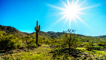 sates: Bright sun rays over the Desert Landscape and a Saguaro Cactus in South Mountain Park in Maricopa County near the city of Phoenix, Arizona, USA