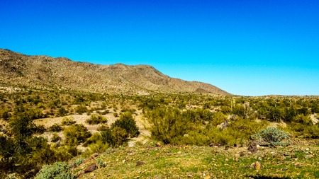 sates: Desert Landscape with Saguaro Cacti and surrounding mountains in South Mountain Park in Maricopa County near the city of Phoenix, Arizona, USA Stock Photo