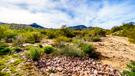 Semi desert landscape and distant mountains under blue sky in Tonto National Forest in the Arizona Desert in the United States