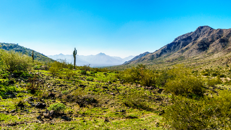 sates: Desert landscape with Saguaro Cacti along the Bajada Hiking Trail in the mountains of South Mountain Park in Maricopa County near the city of Phoenix, Arizona, USA