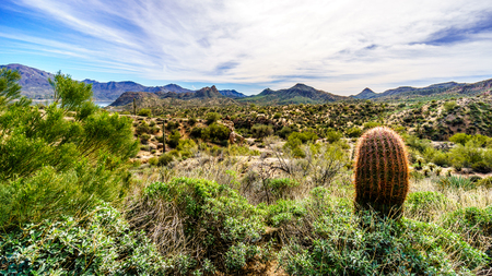 sates: Barrel Cactus in the semi desert landscape of Tonto National Forest in Maricopa County Arizona USA Stock Photo