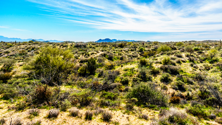 sates: Semi desert landscape and distant mountains under blue sky in Tonto National Forest in the Arizona Desert in the United States