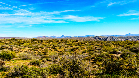 sates: The desert landscape and mountains with its many Saguaro cactuses and other cacti and shrubs along the Bartlett Dam Road in Tonto National Forest in Maricopa County, Arizona in the USA