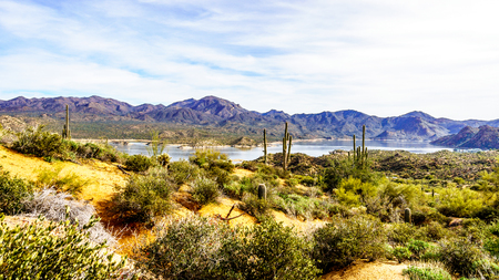 cholla: Lake Bartlett and the surrounding semi desert of Tonto National Forest in Arizona, United States