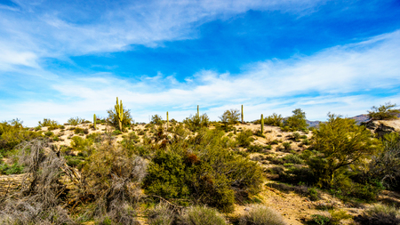 sates: Semi desert landscape and distant mountains under blue sky in Tonto National Forest in the Arizona Desert in the United States.