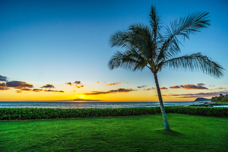 Sunset and a palm tree under blue sky along the coast at Ko Olina on the West Coast of the Hawaiian island of Oahu, with a few colorful clouds on the horizon