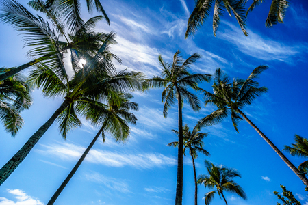 Sun in a blue sky shining through the palm branches of the palm trees on the tropical island of Oahu in island state Hawaii in the Pacific Ocean Zdjęcie Seryjne