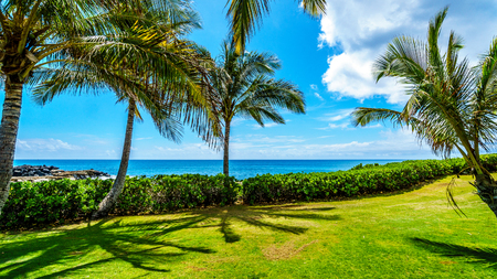 windward: Palm trees swaying in the wind under blue sky at Ko Olina on the West Coast of the Hawaiian island of Oahu