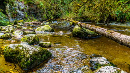 shrubbery: Rocks, trees and boulders in the Salmon habitat of the fast flowing Kanaka Creek in Kanaka Creek Regional Park near the town of Maple Ridge in British Columbia, Canada