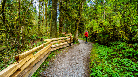 shrubbery: Woman hiking through the temperate rain forest of Kanaka Creek Regional Park near the town of Maple Ridge in British Columbia, Canada