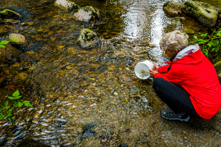 Woman releasing Chum fry into Kanaka Creek at the fish hatchery in Kanaka Creek Regional Park near the town of Maple Ridge in British Columbia, Canada