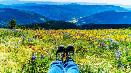 Feet resting in a field of wildflowers in the high alpine of the Shuswap Highlands in central British Columbia Canada