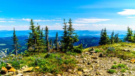 캐나다 브리티시 컬럼비아 중앙에있는 Shuswap 고지대의 높은 고산 식물에 야생화