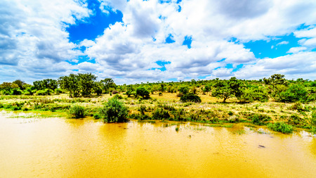 Riverbank of the Olifants River near Kruger Park and Phalaborwa on the border between Limpopo and Mpumalanga Provinces in South Africa Banco de Imagens