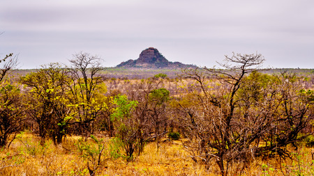 Drought stricken savanna area of northern Kruger National Park in South Africa Фото со стока