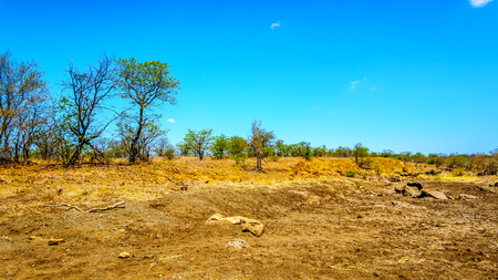 Dry river in November, the end of the dry season, in Kruger National Park in South Africa