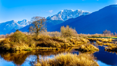 Reflections of snow covered Golden Ears Mountain and Edge Peak in the waters of Pitt-Addington Marsh in the Fraser Valley near Maple Ridge, British Columbia, Canada on a clear winter day