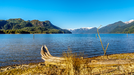 Driftwood on the shores of Pitt Lake with the Snow Capped Peaks of the Golden Ears, Tingle Peak and other Mountain Peaks of the Coast Mountain Range in the Fraser Valley of British Columbia, Canada