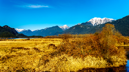 Snow covered Golden Ears Mountain and Edge Peak seen from the dyke of Pitt-Addington Marsh in the Fraser Valley near Maple Ridge, British Columbia, Canada on a clear winter day Stockfoto
