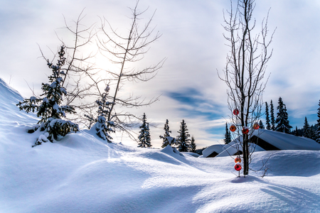 Red Christmas decoration hanging on tree branches of a tree in a deep snow pack Reklamní fotografie