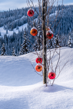 Red Christmas decoration hanging on tree branches of a tree in a deep snow pack Stock Photo