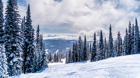 Snow covered trees and deep snow pack on a ski run in the high alpine near the village of Sun Peaks in the Shuswap Highlands of central British Columbia Canada