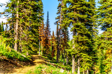 A hiking trail on Tod Mountain near the alpine village of Sun Peaks in the Shuswap Highlands of the central Okanagen in British Columbia, Canada Reklamní fotografie