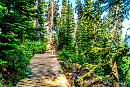 A senior woman enjoying the outdoors on a hiking trail on Tod Mountain near the alpine village of Sun Peaks in the Shuswap Highlands of the central Okanagen in British Columbia, Canada Stock Photo