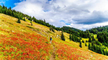 Hiking through the alpine meadows in fall colors on Tod Mountain near the village of Sun Peaks in the Shuswap Highlands of British Columbia