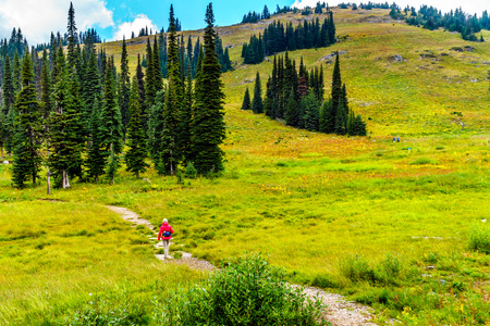 Senior Woman Hiking through the alpine meadows in fall colors on Tod Mountain near the village of Sun Peaks in the Shuswap Highlands of British Columbia Stock Photo