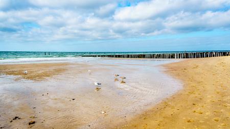Spiaggia del Mare del Nord e Westerschelde vicino alla città portuale di Vlissingen nella provincia di Zeeland, Paesi Bassi