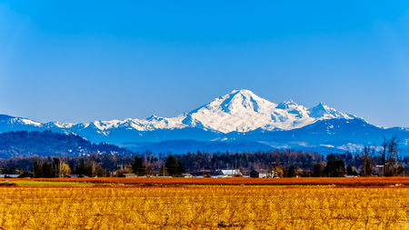 Mount Baker, a dormant volcano in Washington State viewed from the Blueberry Fields of Glen Valley near Abbotsford British Columbia, Canada under clear blue sky on a nice winter day Stockfoto