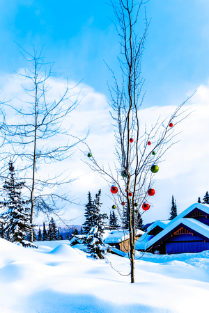 Snow covered Red and Green Christmas Decorations hanging on tree branches of a tree in a deep snow pack at Sun Peaks Ski Village Reklamní fotografie