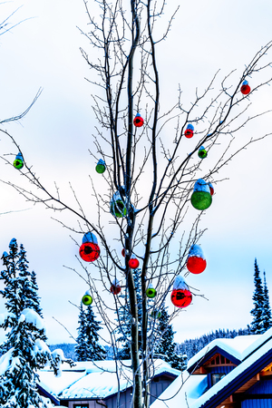 Snow covered Red and Green Christmas Decorations hanging on tree branches of a tree in a deep snow pack at Sun Peaks Ski Village Stock Photo