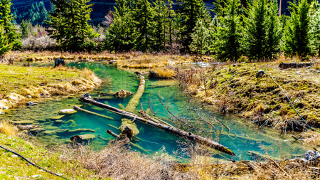 Logging debris in the clear waters of a salmon spawning channel on Cayoosh Creek between Seton Lake and the Fraser River in British Columbia, Canada