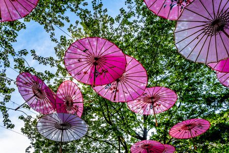 Pink Chinese Umbrellas or Parasols under a tree canopy in the Yale Town suburb of Vancouver, British Columbia, Canada Stock fotó