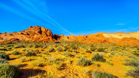 Colorful Sandstone Mountains at Sunrise on the Rainbow Vista Trail in the Valley of Fire State Park in Nevada, USA