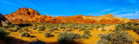 Panorama of the colorful Sandstone Mountains at Sunrise on the Rainbow Vista Trail in the Valley of Fire State Park in Nevada, USA Stockfoto