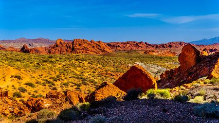 The colorful red sandstone rock formations along the Fire Wave Trail in the Valley of Fire State Park in Nevada, USA Imagens