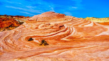 The famous Wave Rock among the colorful red, yellow and white banded rock formations at the end of the Fire Wave Trail in the Valley of Fire State Park in Nevada, USA