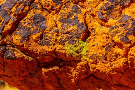 Moss growing on a large colorful red sandstone rock along the Fire Wave Trail in the desert of the Valley of Fire State Park in Nevada, USA Imagens