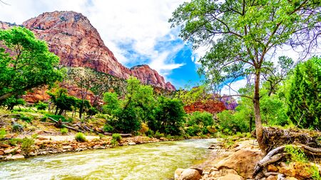 The Massive Red, Pink and Cream  Sandstone Cliffs viewed from the Parus Trail as it follows along and over the meandering Virgin River in Zion National Park in Utah, USA Imagens