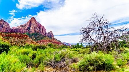 The Watchman mountain viewed from the Parus Trail that meanders along and over the Virgin River in Zion National Park in Utah, USA
