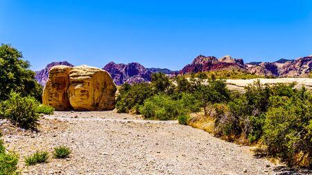 Olbrzymie żółte skały z piaskowca na szlaku kamieniołomu piaskowca w National Conservation Area Red Rock Canyon w pobliżu Las Vegas, Nevada, Stany Zjednoczone