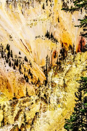 The yellow and orange sandstone sculptures in the cliffs of the Grand Canyon of the Yellowstone River in Yellowstone National Park in Wyoming, United States of America