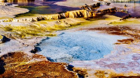 Crystal Clear Blue Water and Brown Bacteria Mats created by cyanobacteria in the water of the Travertine Terraces formed by Geysers at Mammoth Hot Springs in Yellowstone National Park, Wyoming, USA